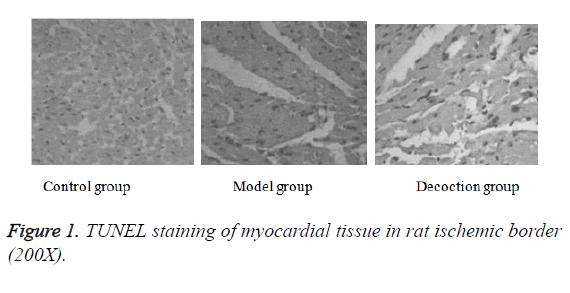 biomedres-myocardial-tissue