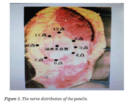 biomedres-nerve-distribution