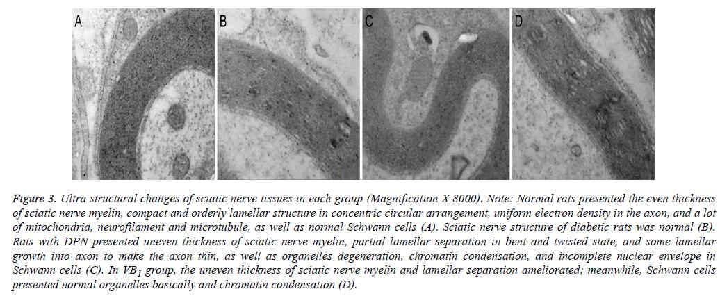 biomedres-nerve-tissues