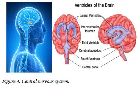 biomedres-nervous-system