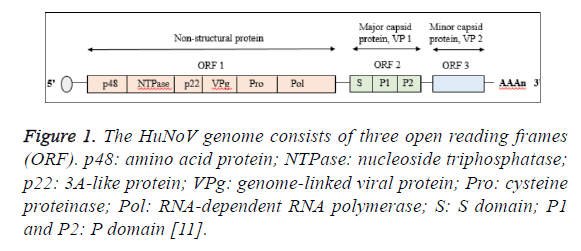 biomedres-nucleoside-triphosphatase
