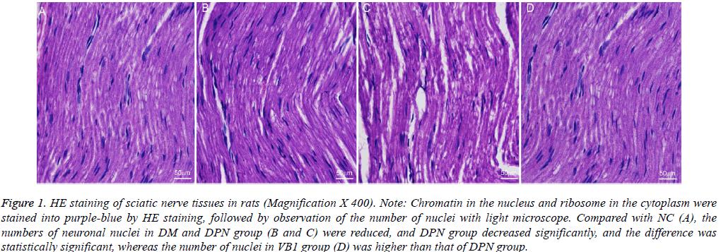 biomedres-nucleus-ribosome