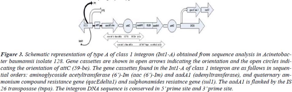 biomedres-orientation-open-circles
