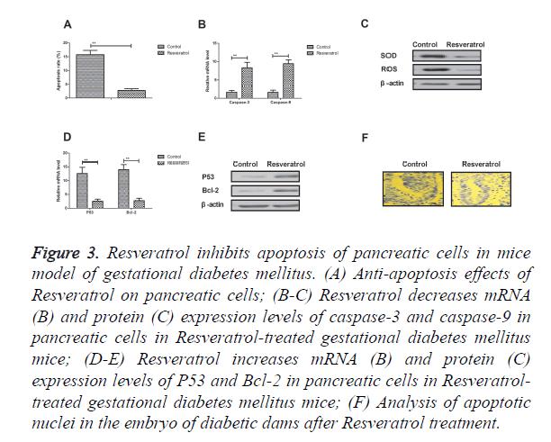 biomedres-pancreatic-cells