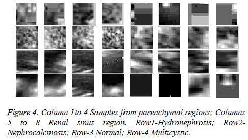 biomedres-parenchymal-regions