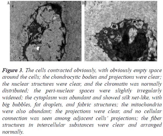 biomedres-peri-nuclear-spaces