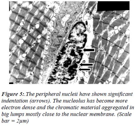 biomedres-peripheral-nucleii