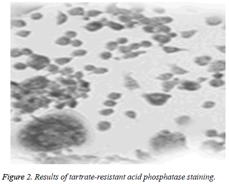 biomedres-phosphatase-staining
