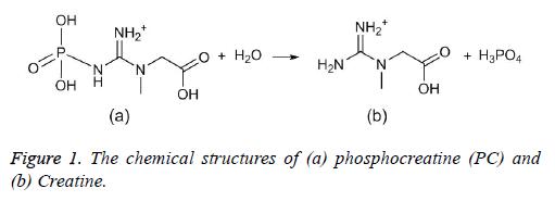 biomedres-phosphocreatine-Creatine