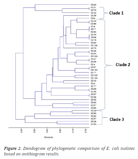 biomedres-phylogenetic-comparison