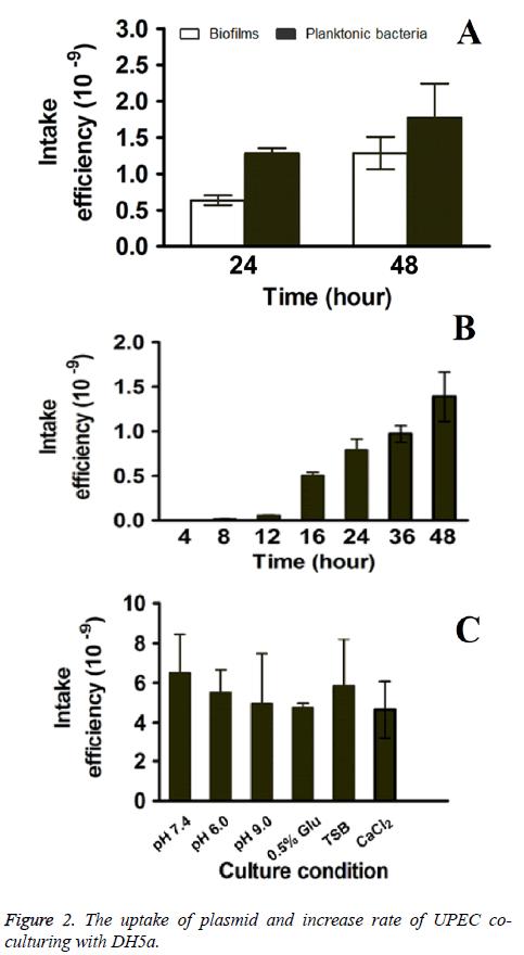 biomedres-plasmid-uptake