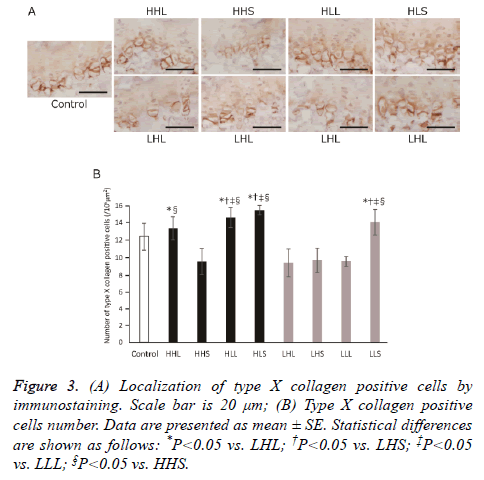 biomedres-positive-cells