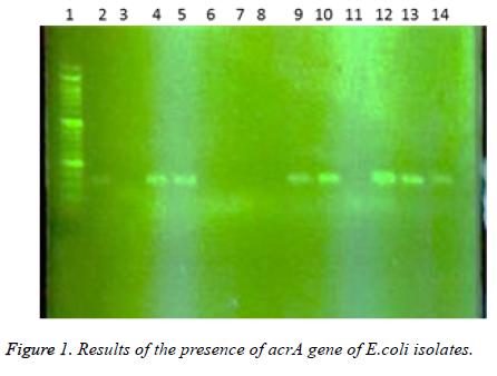 biomedres-presence-acrA-gene