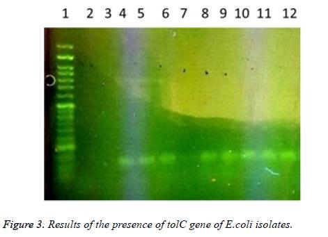 biomedres-presence-tolC-gene