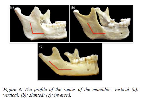 biomedres-profile-ramus