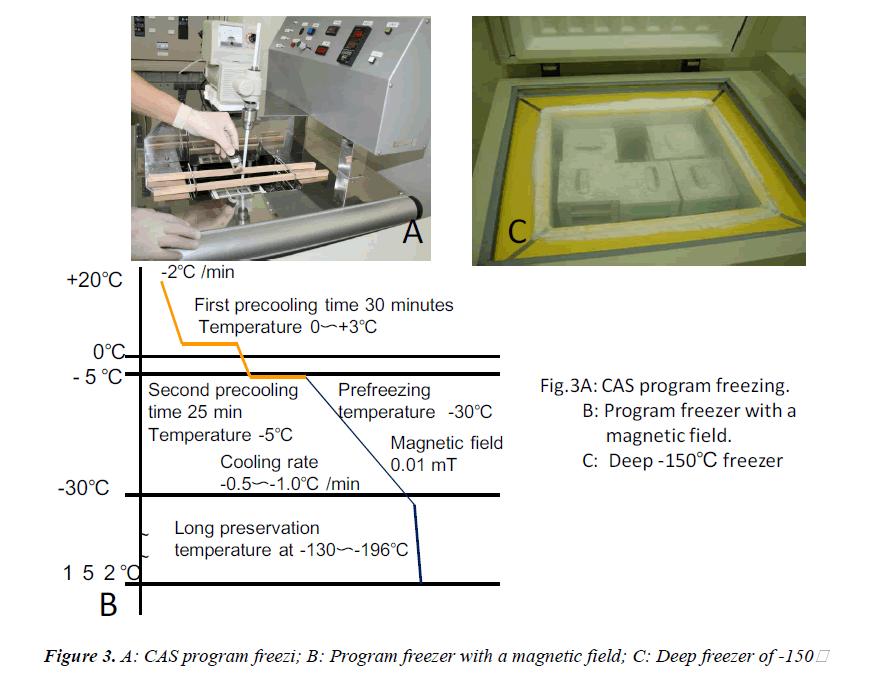 biomedres-program-freezi-magnetic