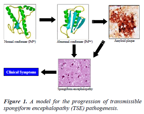biomedres-progression-transmissible-spongiform
