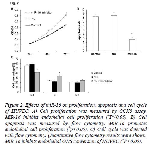 biomedres-proliferation-apoptosis