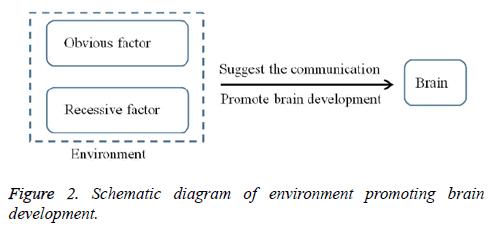 biomedres-promoting-brain