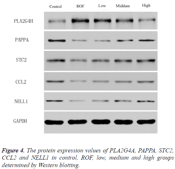 biomedres-protein-expression-values