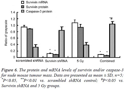 biomedres-protein-mRNA-levels