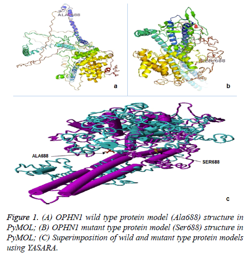 biomedres-protein-model