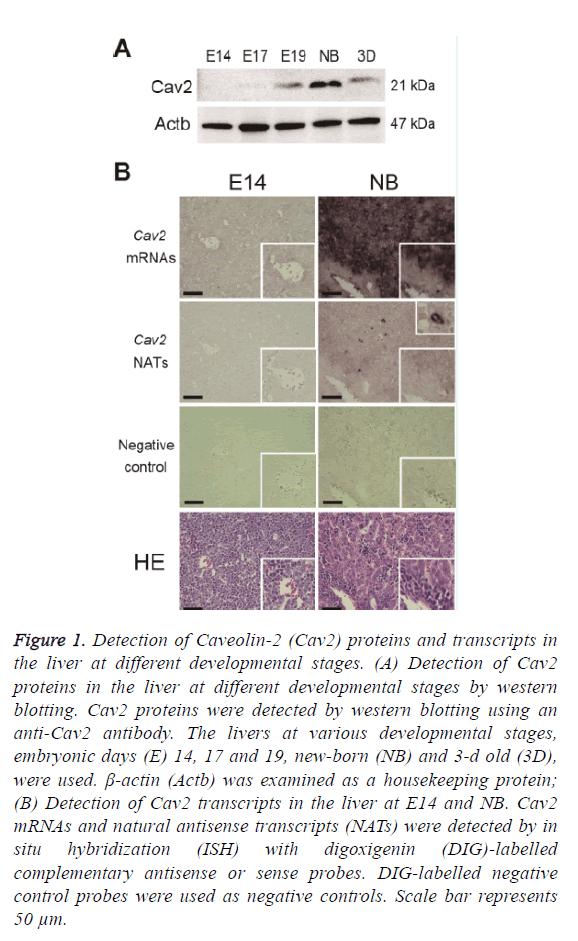 biomedres-proteins-transcripts