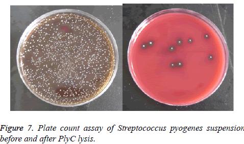 biomedres-pyogenes-suspension