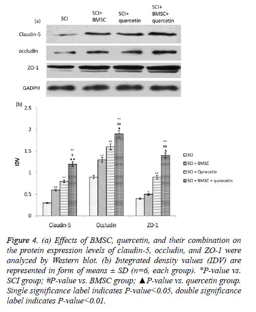 biomedres-quercetin-group