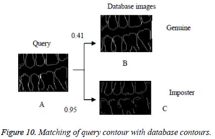 biomedres-query-contour