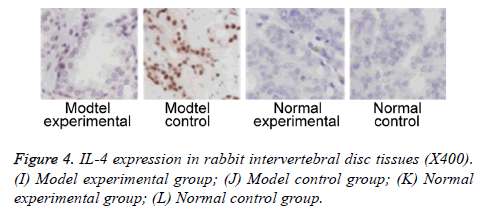 biomedres-rabbit-tissues