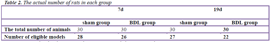 biomedres-rats-each-group