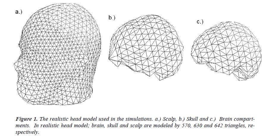 biomedres-realistic-head-model