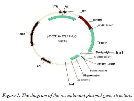 biomedres-recombinant-plasmid