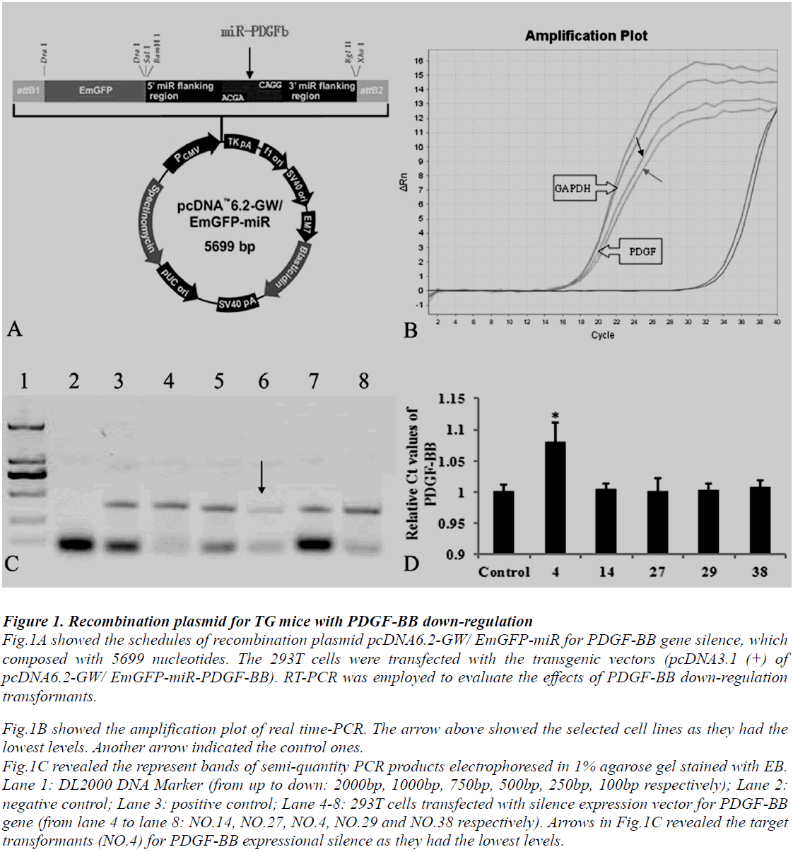 biomedres-recombination-plasmid
