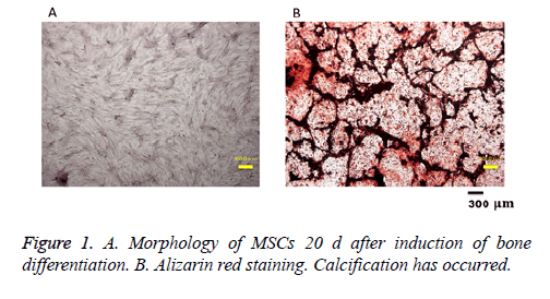 biomedres-red-staining