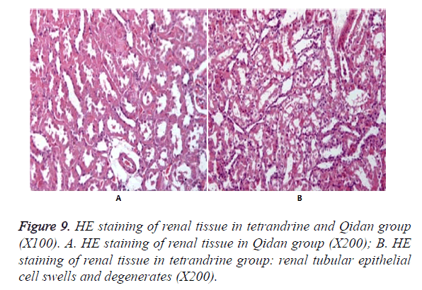 biomedres-renal-tissue