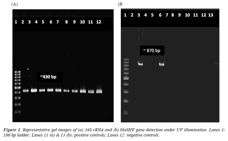 biomedres-representative-gel-images