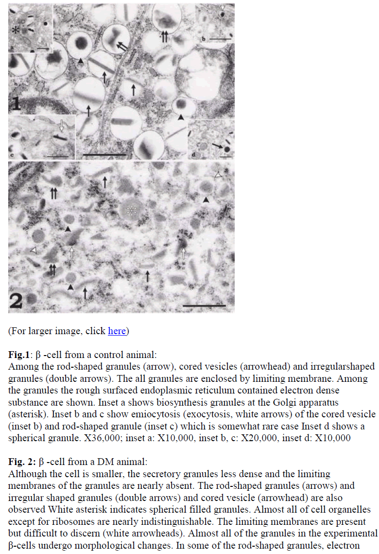 biomedres-rod-shaped-granules
