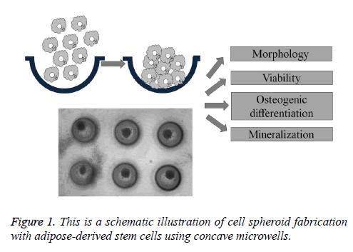 biomedres-schematic-illustration
