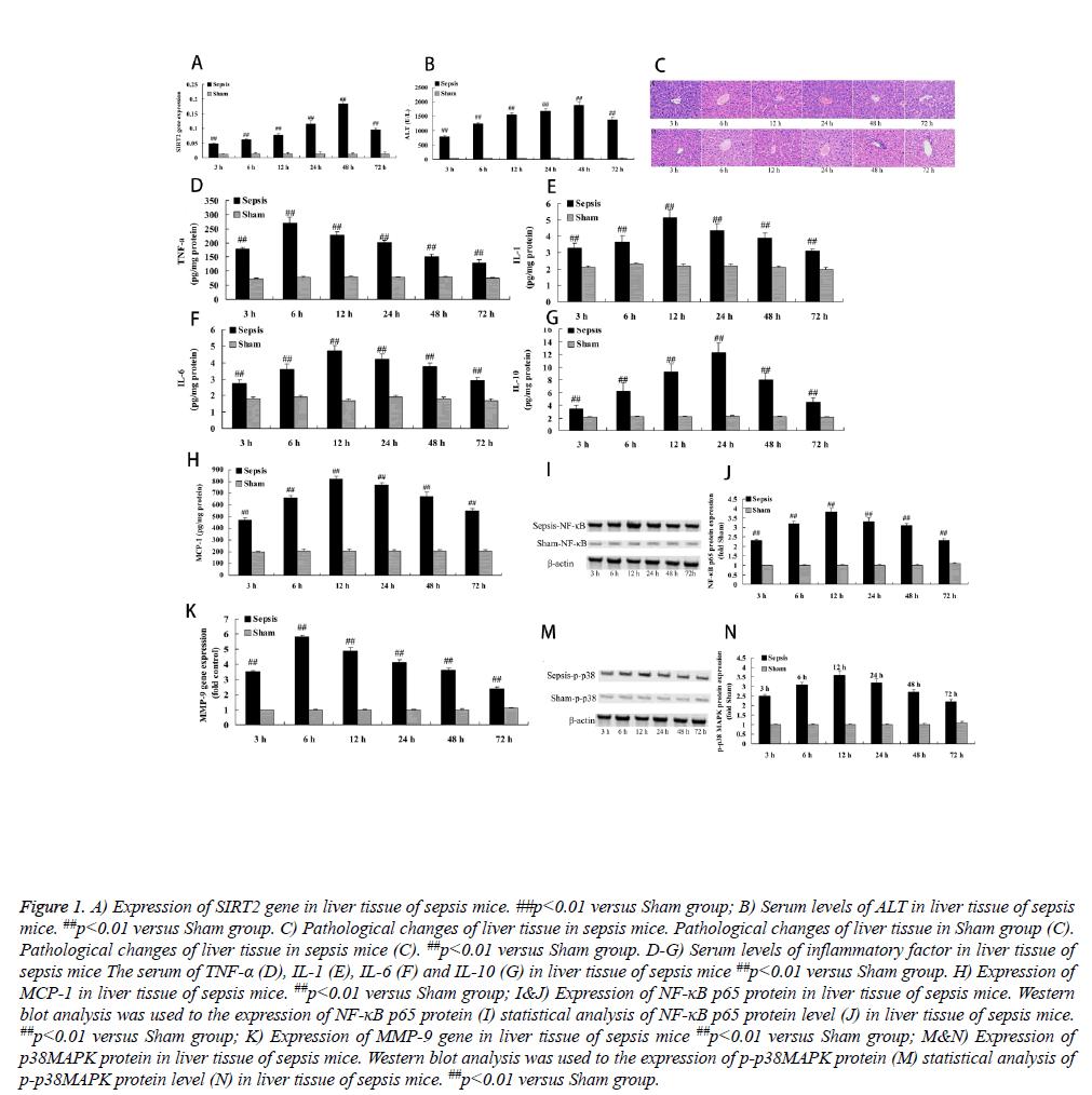 biomedres-sepsis-mice