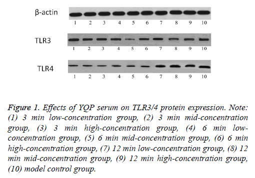 biomedres-serum-protein