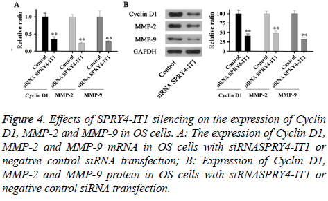 biomedres-siRNA-transfection