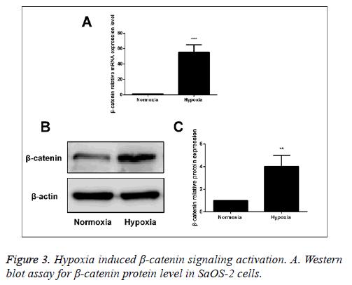biomedres-signaling-activation
