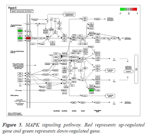 biomedres-signaling-pathway