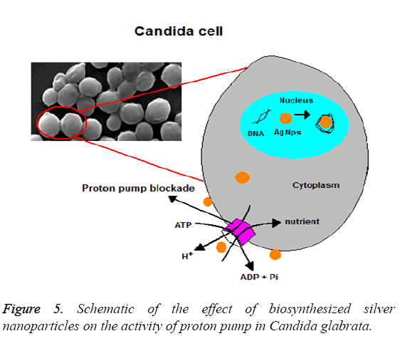 biomedres-silver-nanoparticles