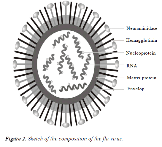 biomedres-sketch-composition