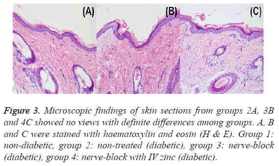 biomedres-skin-sections-groups