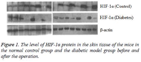 biomedres-skin-tissue