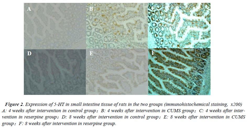 biomedres-small-intestine-tissue